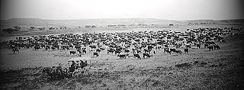PO Ranch Cattle Drive